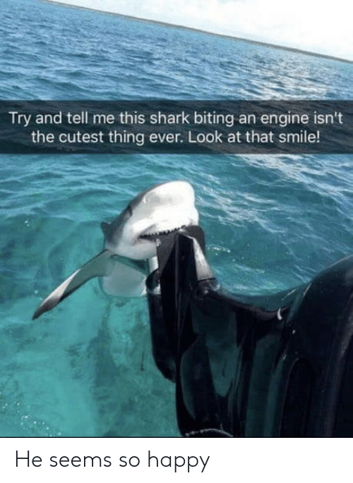 Cutest Thing: Try and tell me this shark biting an engine isn't  the cutest thing ever. Look at that smile! He seems so happy