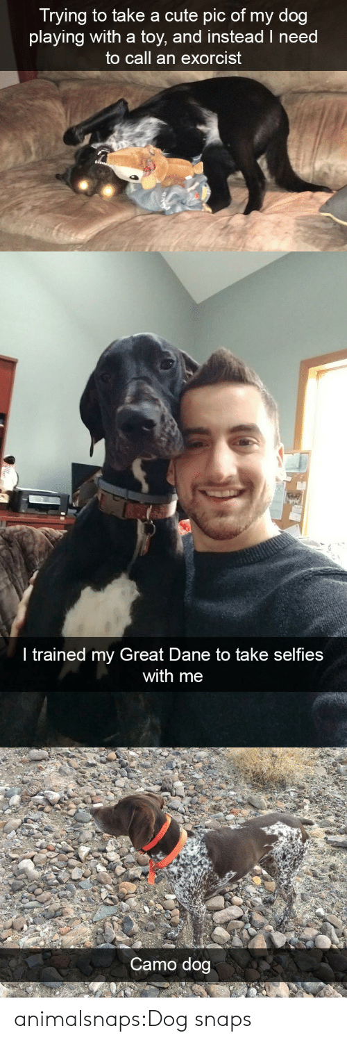 Cute, Target, and Tumblr: Trying to take a cute pic of my dog  playing with a toy, and instead I need  to call an exorcist   ir  I trained my Great Dane to take selfies  with me   Camo dog animalsnaps:Dog snaps
