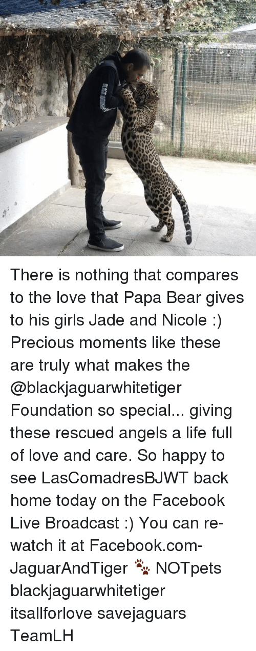 Facebook, Girls, and Life: ttCM There is nothing that compares to the love that Papa Bear gives to his girls Jade and Nicole :) Precious moments like these are truly what makes the @blackjaguarwhitetiger Foundation so special... giving these rescued angels a life full of love and care. So happy to see LasComadresBJWT back home today on the Facebook Live Broadcast :) You can re-watch it at Facebook.com-JaguarAndTiger 🐾 NOTpets blackjaguarwhitetiger itsallforlove savejaguars TeamLH