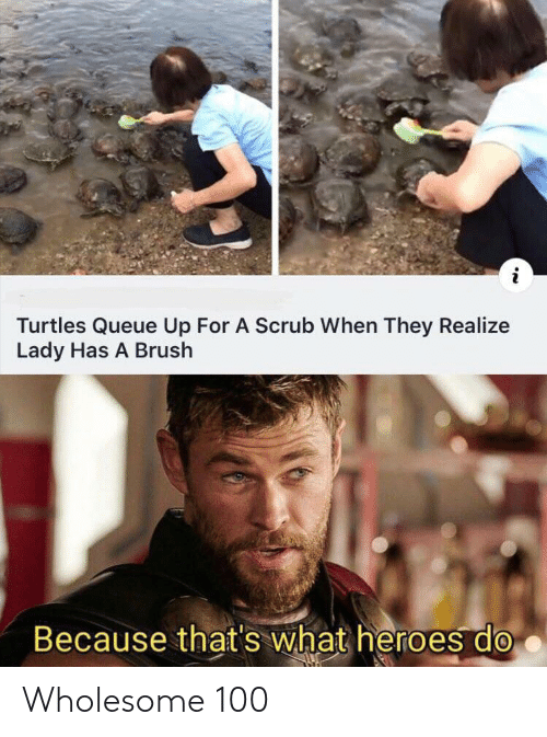 Heroes, Wholesome, and Turtles: Turtles Queue Up For A Scrub When They Realize  Lady Has A Brush  Because that's what heroes do Wholesome 100