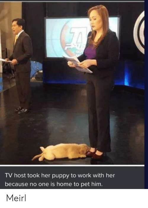 Work, Home, and Puppy: TV host took her puppy to work with her  because no one is home to pet him. Meirl