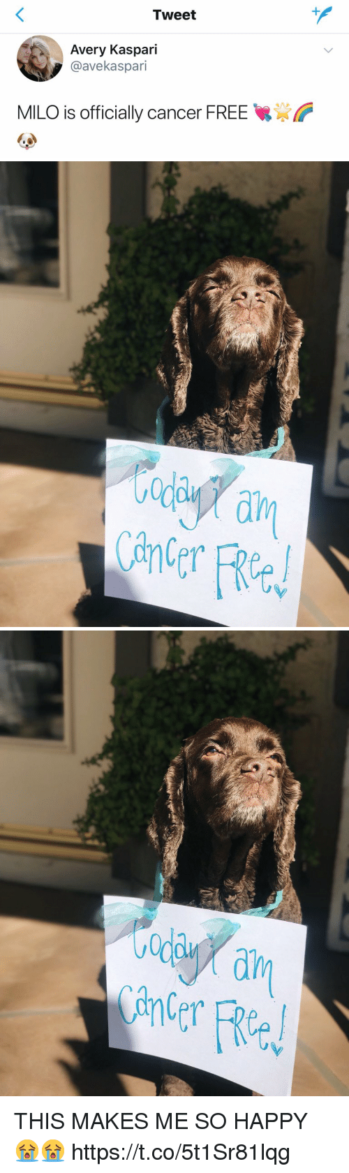 Cancer, Free, and Happy: Tweet  Avery Kaspari  @avekaspari  MILO is officially cancer FREE   ada  ain  Cane THIS MAKES ME SO HAPPY 😭😭 https://t.co/5t1Sr81lqg
