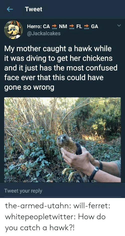 Confused, Gif, and Target: Tweet  Herro: CA NM GA  KID  @Jackalcakes  My mother caught a hawk while  it was diving to get her chickens  and it just has the most confused  face ever that this could have  gone so wrong  Tweet your reply the-armed-utahn: will-ferret:  whitepeopletwitter: How do you catch a hawk?!