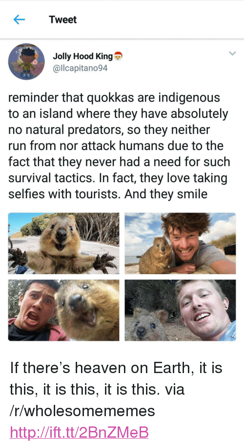 "indigenous: Tweet  Jolly Hood King  @llcapitano94  reminder that quokkas are indigenous  to an island where they have absolutely  no natural predators, so they neither  run from nor attack humans due to the  fact that they never had a need for such  survival tactics. In fact, they love taking  selfies with tourists. And they smile <p>If there&rsquo;s heaven on Earth, it is this, it is this, it is this. via /r/wholesomememes <a href=""http://ift.tt/2BnZMeB"">http://ift.tt/2BnZMeB</a></p>"