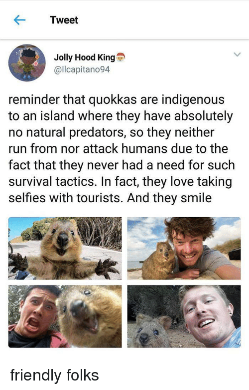 Love, Run, and Smile: Tweet  Jolly Hood King  @llcapitano94  reminder that quokkas are indigenous  to an island where they have absolutely  no natural predators, so they neither  run from nor attack humans due to the  fact that they never had a need for such  survival tactics. In fact, they love taking  selfies with tourists. And they smile friendly folks