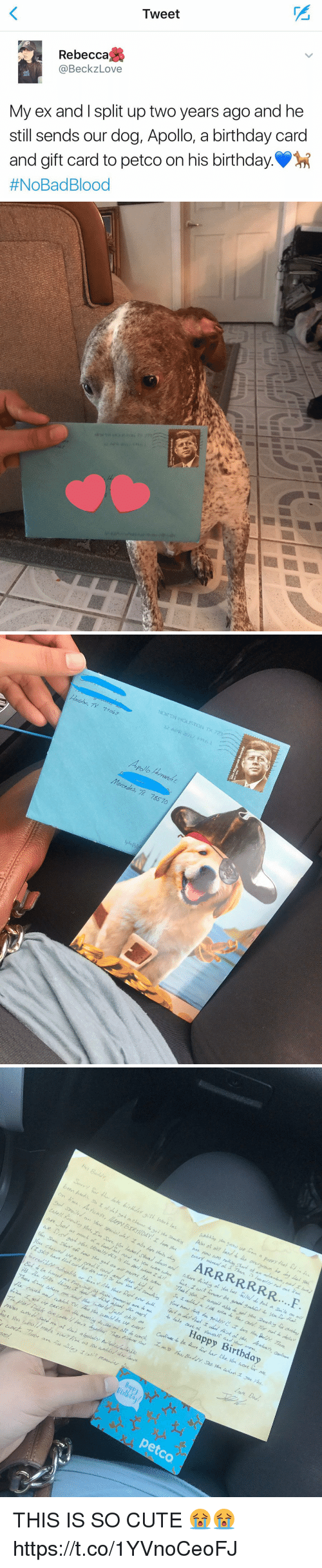 "Inv: Tweet  Rebecca  @Beckz Love  My ex and I split up two years ago and he  still sends our dog, Apollo, a birthday card  and gift card to petco on his birthday  #NoBad Blood   Fangerald Kennedy   Apollo  Mercedes, 785 10   On lieu Avuan, LArpy BERT DAY!工hare洳A eAAd  are Just  ybu, US a)Iy M7 ps tha Aw/ cん ez.hen mueZuiR goru er be gae, 3-und-o yourr Hal  4m> 》hat ""gatan wifne-ver Me a체 7hales, .ZuasnV4bledom,éu .Decay-Granky  wmyonofxcaa/are/Aun hid从品ェa/¼ノ晓IA eWadoNm/card 7,ynsidon inv,  ineree以/y Achable or few/NaNmd rPrr / e-w ea/oday-Aad d., ant d id. Aalena  Arakay's, Carmen  Happy Birthday  Caud and amich TV ~儿e aeukWe w e-cry hawide hare *r he/ Zke cán core w me  エ28t,ss /ai,syLa./X-De y&a ヱNk¼u.  fee Abu乙eeee1/ m/e zeeryAmarGu amhhe/dwave  CANdi- 77ay art-AL ~,,ひゴ ,ツノemmee  Berldar  petco  r THIS IS SO CUTE 😭😭 https://t.co/1YVnoCeoFJ"