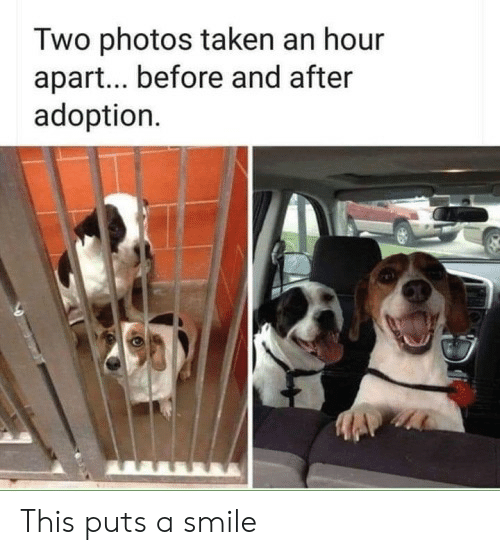 Adoption: Two photos taken an hour  apar... before and after  adoption This puts a smile