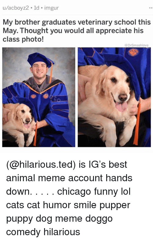 Cats, Chicago, and Funny: u/acboyz2. ld. imgur  My brother graduates veterinary school this  class photo!  May.: Thought you would all appreciate his  @DrSmashlove (@hilarious.ted) is IG's best animal meme account hands down. . . . . chicago funny lol cats cat humor smile pupper puppy dog meme doggo comedy hilarious