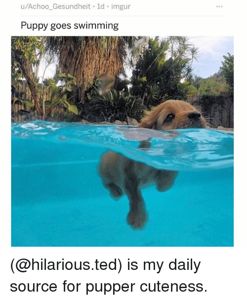 Memes, Ted, and Imgur: u/Achoo_Gesundheit ld imgur  Puppy goes swimming (@hilarious.ted) is my daily source for pupper cuteness.