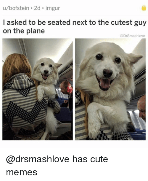 cute memes: u/bofstein . 2d imgur  l asked to be seated next to the cutest guy  on the plane  @DrSmashlove @drsmashlove has cute memes