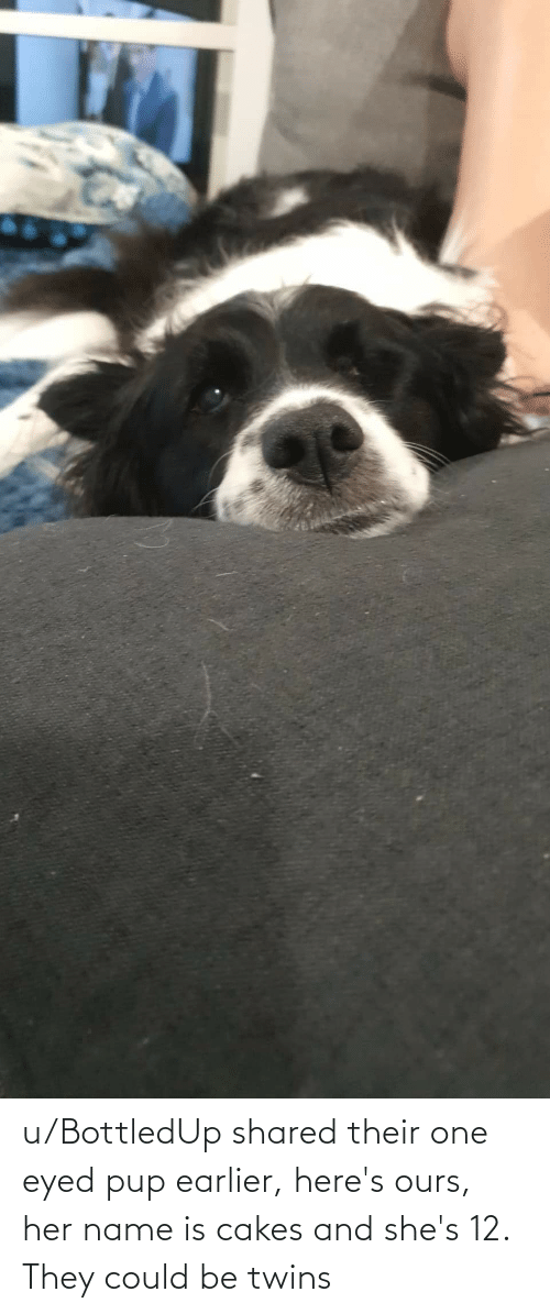 cakes: u/BottledUp shared their one eyed pup earlier, here's ours, her name is cakes and she's 12. They could be twins