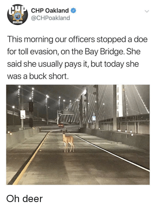 Deer, Doe, and Today: U CHP Oakland  @CHPoakland  OAKLAND  This morning our officers stopped a doe  for toll evasion, on the Bay Bridge. She  said she usually pays it, but today she  was a buck short. Oh deer
