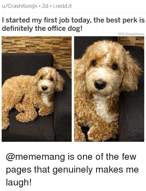 Definitely, Memes, and The Office: u/CrashKonijn 2d i.redd.it  I started my first job today, the best perk is  definitely the office dog!  @DrSmashlove @mememang is one of the few pages that genuinely makes me laugh!