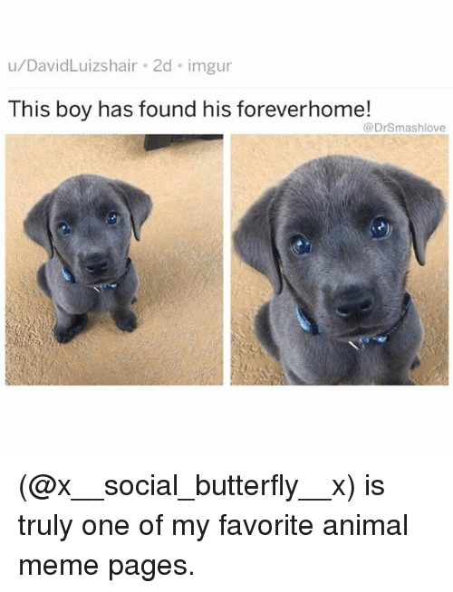 Meme, Memes, and Animal: u/DavidLuizshair 2d imgur  This boy has found his foreverhome!  @DrSmashlove (@x__social_butterfly__x) is truly one of my favorite animal meme pages.