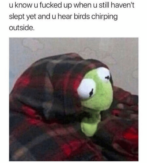 Birds, Still, and When U: u know u fucked up when u still haven't  slept yet and u hear birds chirping  outside.