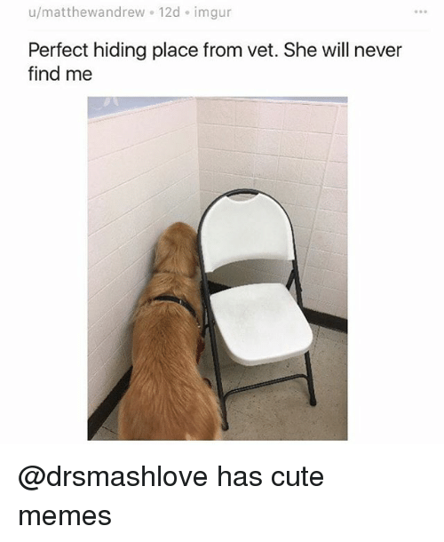 Cute, Funny, and Memes: u/matthewandrew 12d imgur  Perfect hiding place from vet. She will never  find me @drsmashlove has cute memes