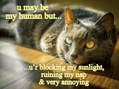 My Human: u may be  my human but..  .u'r blocking my sunlight,  ruining my nap  &very annoying