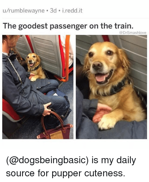 Memes, Train, and 🤖: u/rumblewayne 3d i.redd.it  The goodest passenger on the train.  @DrSmashlove (@dogsbeingbasic) is my daily source for pupper cuteness.