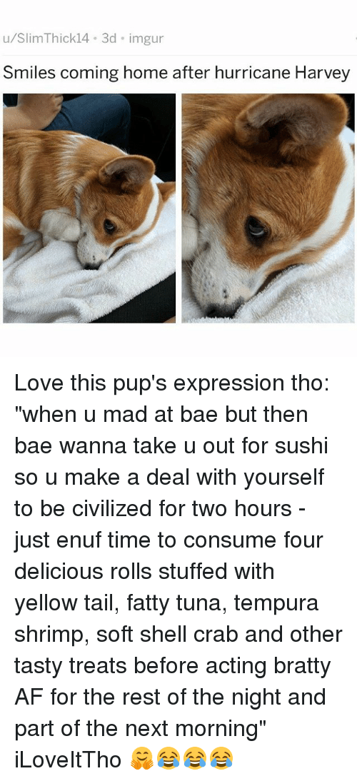 """Af, Bae, and Love: u/SlimThick14 3d imgur  Smiles coming home after hurricane Harvey Love this pup's expression tho: """"when u mad at bae but then bae wanna take u out for sushi so u make a deal with yourself to be civilized for two hours - just enuf time to consume four delicious rolls stuffed with yellow tail, fatty tuna, tempura shrimp, soft shell crab and other tasty treats before acting bratty AF for the rest of the night and part of the next morning"""" iLoveItTho 🤗😂😂😂"""