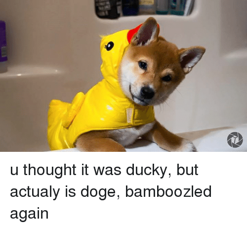 Dank, Doge, and 🤖: u thought it was ducky, but actualy is doge, bamboozled again