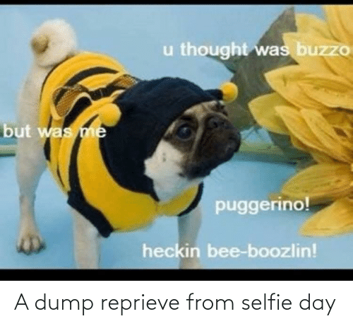 Heckin: u thought was buzzo  but was me  puggerino!  heckin bee-boozlin! A dump reprieve from selfie day