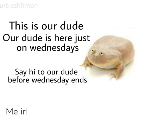 Dude, Wednesday, and Irl: u/trashlimon  This is our dude  Our dude is here just  on wednesdays  Say hi to our dude  before wednesday ends Me irl