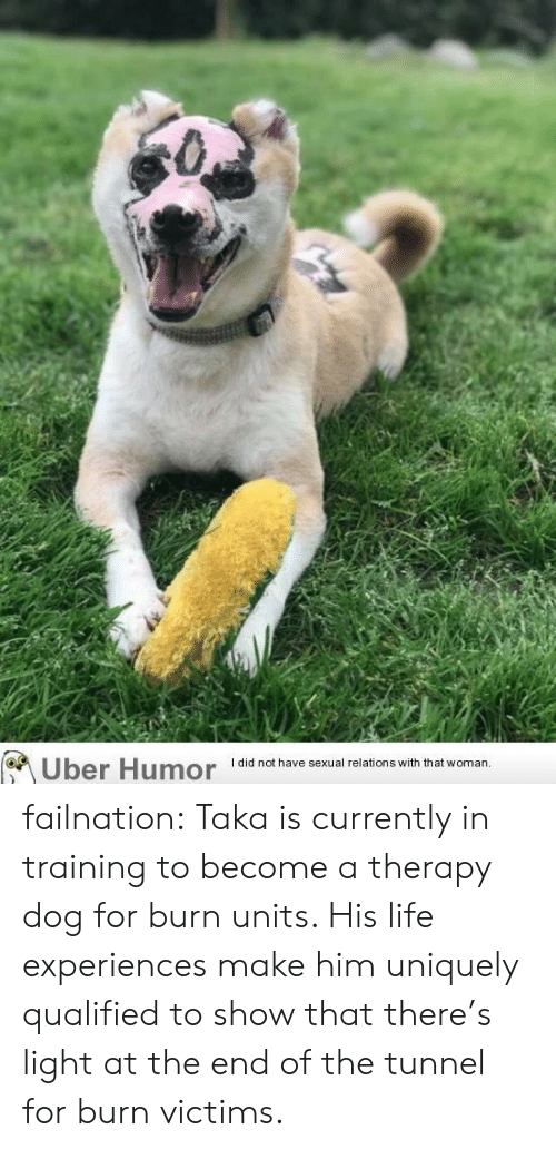 tunnel: Uber Humor  I did not have sexual relations with that woman.. failnation:  Taka is currently in training to become a therapy dog for burn units. His life experiences make him uniquely qualified to show that there's light at the end of the tunnel for burn victims.