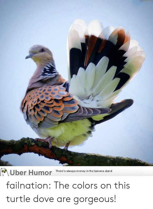 Dove, Money, and Tumblr: Uber Humor  There's always money in the banana stand failnation:  The colors on this turtle dove are gorgeous!