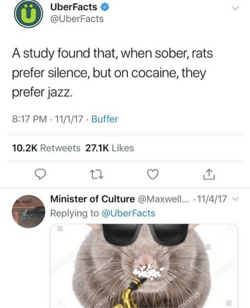 maxwell: UberFacts  @UberFacts  A study found that, when sober, rats  prefer silence, but on cocaine, they  prefer jazz.  8:17 PM . 11/1/17 Buffer  10.2K Retweets 27.1K Likes  Minister of Culture @Maxwell.. 11/4/17  Replying to @UberFacts