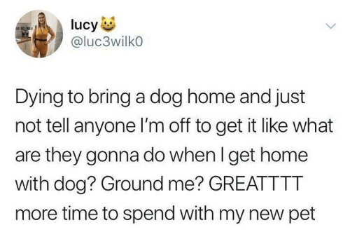 Im Off: ucy  @luc3wilko  Dying to bring a dog home and just  not tell anyone I'm off to get it like what  are they gonna do when I get home  with dog? Ground me? GREATTTT  more time to spend with my new pet