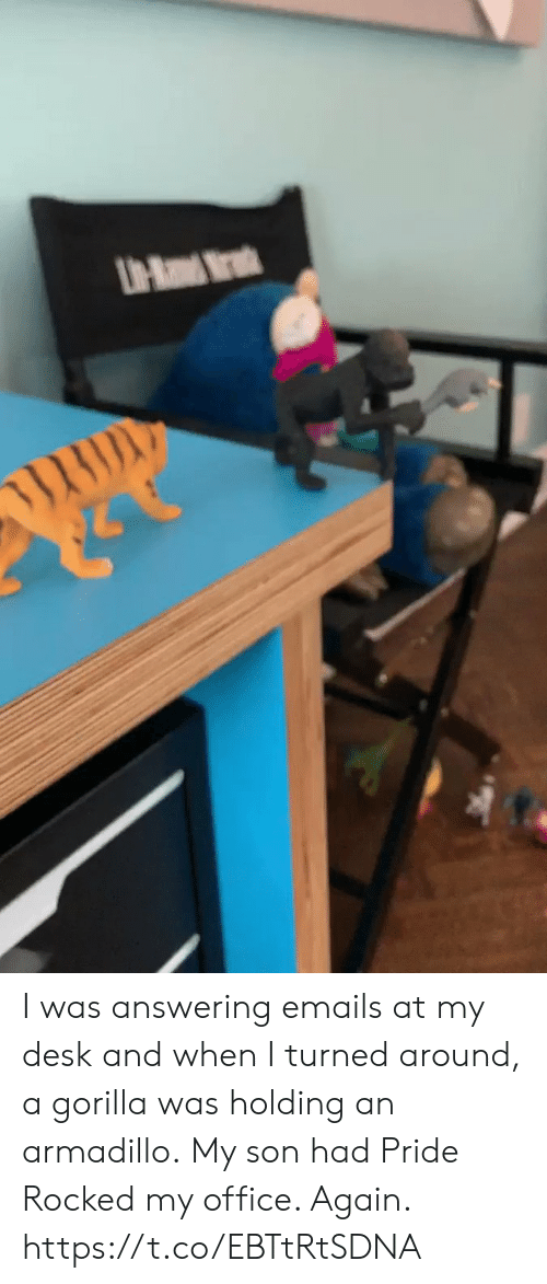 Memes, Desk, and Office: UH-Ra Mr I was answering emails at my desk and when I turned around, a gorilla was holding an armadillo. My son had Pride Rocked my office. Again. https://t.co/EBTtRtSDNA