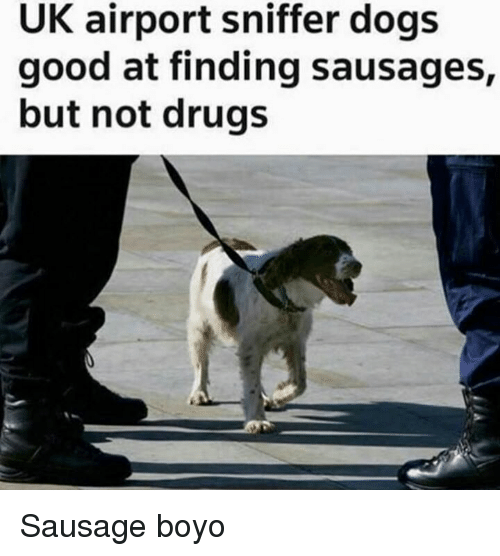 Dogs, Drugs, and Good: UK airport sniffer dogs  good at finding sausages,  but not drugs Sausage boyo