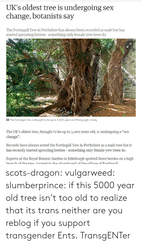 "Spotted: UK's oldest tree is undergoing sex  change, botanists say  The Fortingall Yew in Perthshire has always been recorded as male but has  started sprouting berries-something only female yew trees do  The Fortingall Yew is thought to be up to 5,000 years old Photograph: Alamy  The UK's oldest tree, thought to be up to 5,000 years old, is undergoing a ""sex  change""  Records have always noted the Fortingall Yew in Perthshire as a male tree but it  has recently started sprouting berries - something only female yew trees do.  Experts at the Royal Botanic Garden in Edinburgh spotted three berries on a high  branch off the trae located in the churchvard of tho village of Fortinaall scots-dragon: vulgarweed:  slumberprince:  if this 5000 year old tree isn't too old to realize that its trans neither are you  reblog if you support transgender Ents.  TransgENTer"