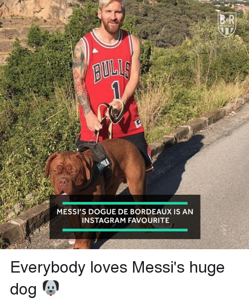 Instagram, Dog, and Huge: UL  MESSI'S DOGUE DE BORDEAUX IS AN  INSTAGRAM FAVOURITE Everybody loves Messi's huge dog 🐶
