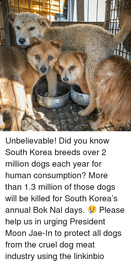 annuale: Unbelievable! Did you know South Korea breeds over 2 million dogs each year for human consumption? More than 1.3 million of those dogs will be killed for South Korea's annual Bok Nal days. 😢 Please help us in urging President Moon Jae-In to protect all dogs from the cruel dog meat industry using the linkinbio
