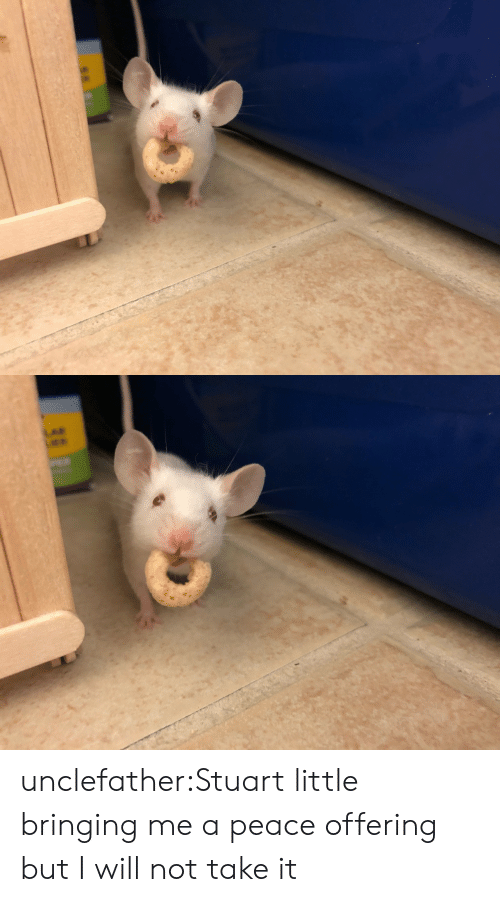 Stuart: unclefather:Stuart little bringing me a peace offering but I will not take it