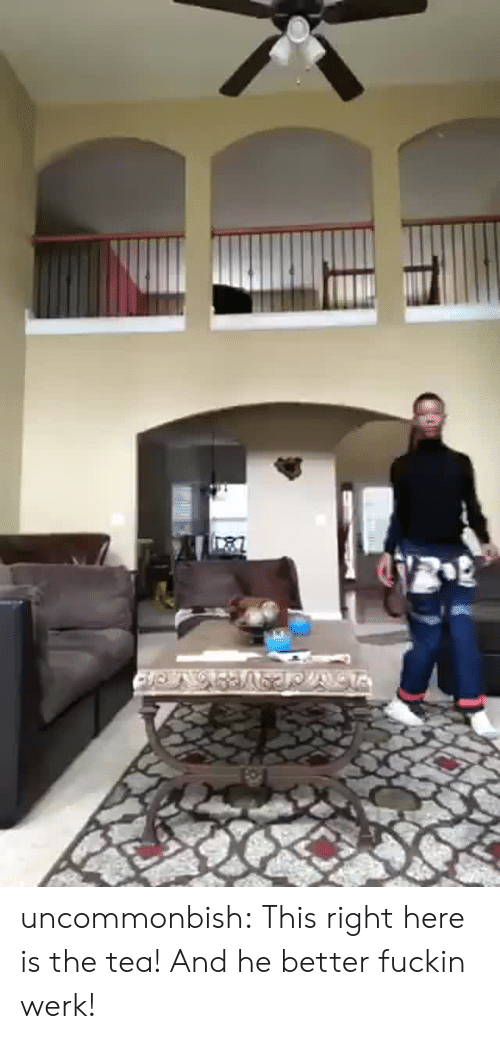 Gif, Tumblr, and Blog: uncommonbish:   This right here is the tea! And he better fuckin werk!