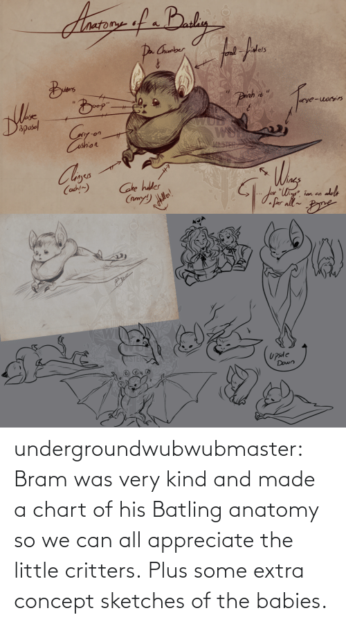 Kind: undergroundwubwubmaster:  Bram was very kind and made a chart of his Batling anatomy so we can all appreciate the little critters. Plus some extra concept sketches of the babies.
