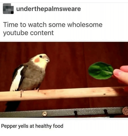 healthy food: underthepalmsweare  Time to watch some wholesome  youtube content  Pepper yells at healthy food