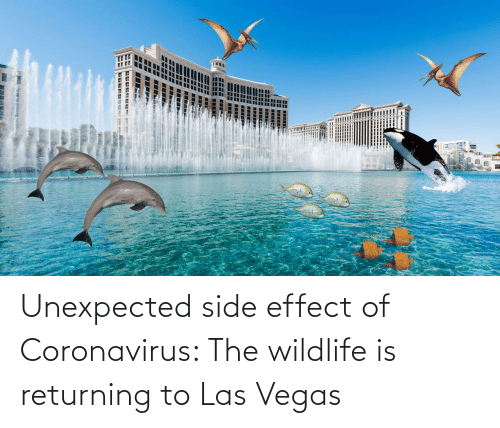 Unexpected: Unexpected side effect of Coronavirus: The wildlife is returning to Las Vegas