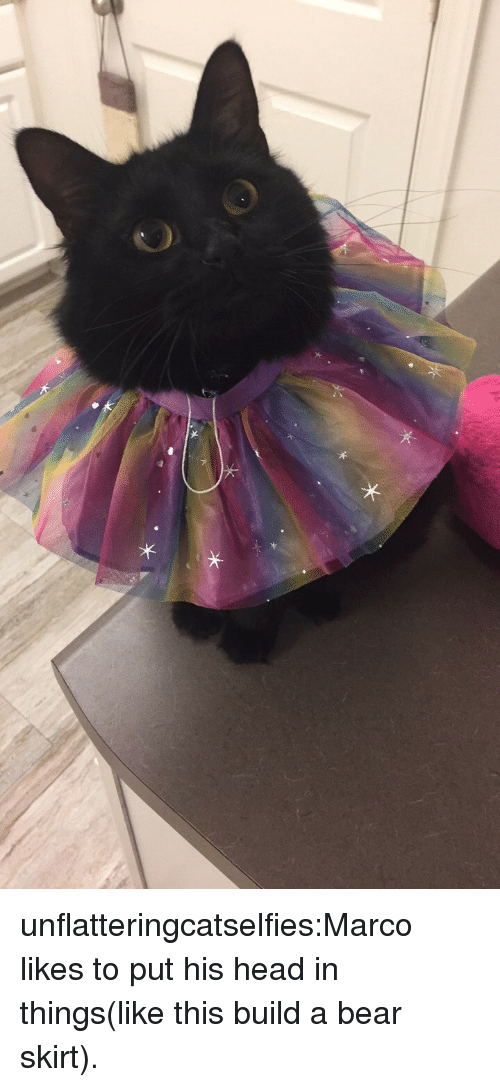Build a Bear: unflatteringcatselfies:Marco likes to put his head in things(like this build a bear skirt).