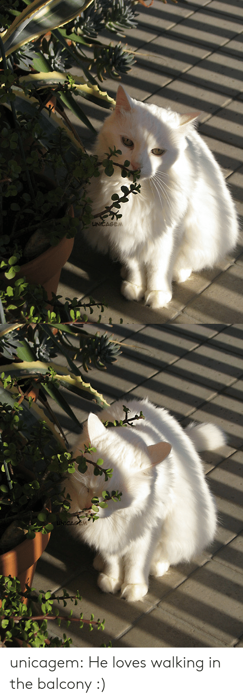 Tumblr, Blog, and Http: unicagem:  He loves walking in the balcony :)