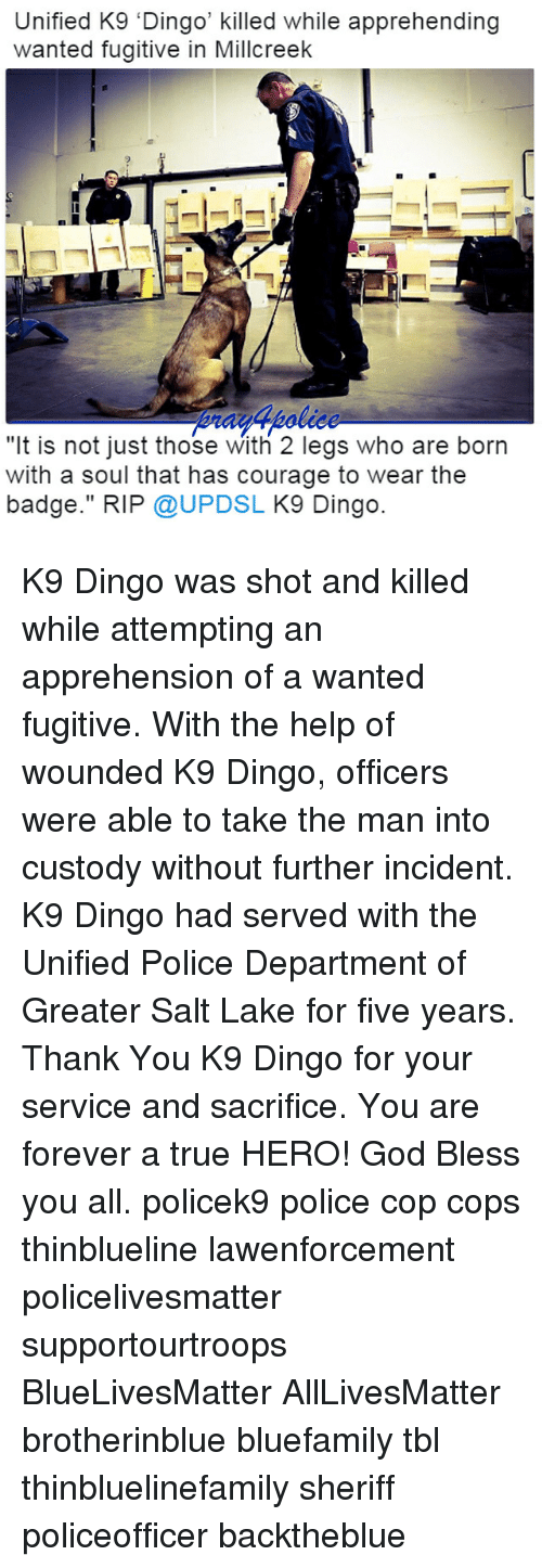 """lakings: Unified K9 'Dingo' killed while apprehending  wanted fugitive in Millcreek  """"It is not just those With 2 legs who are born  with a soul that has courage to wear the  badge."""" RIP @UPDSL K9 Dingo. K9 Dingo was shot and killed while attempting an apprehension of a wanted fugitive. With the help of wounded K9 Dingo, officers were able to take the man into custody without further incident. K9 Dingo had served with the Unified Police Department of Greater Salt Lake for five years. Thank You K9 Dingo for your service and sacrifice. You are forever a true HERO! God Bless you all. policek9 police cop cops thinblueline lawenforcement policelivesmatter supportourtroops BlueLivesMatter AllLivesMatter brotherinblue bluefamily tbl thinbluelinefamily sheriff policeofficer backtheblue"""