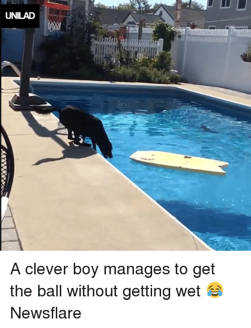 Dank, Boy, and 🤖: UNILAD A clever boy manages to get the ball without getting wet 😂  Newsflare