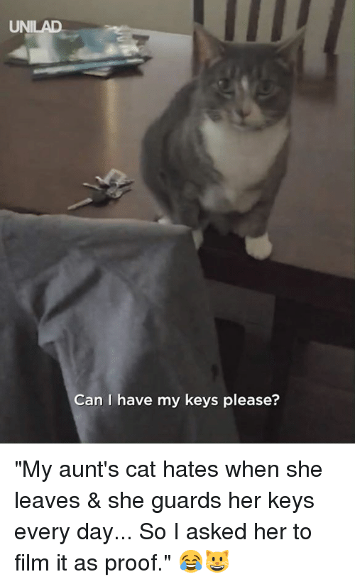 """Dank, Film, and 🤖: UNILAD  Can I have my keys please? """"My aunt's cat hates when she leaves & she guards her keys every day... So I asked her to film it as proof."""" 😂😺"""