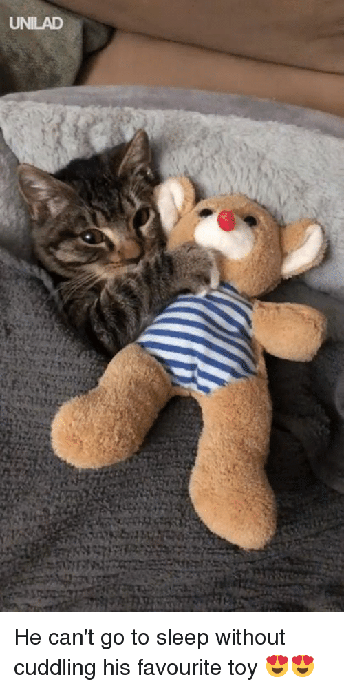 Dank, Go to Sleep, and Sleep: UNILAD He can't go to sleep without cuddling his favourite toy 😍😍