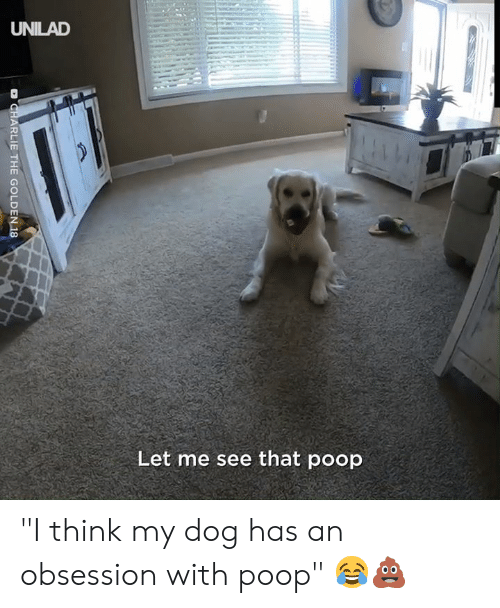 "Charlie, Dank, and Poop: UNILAD  Let me see that poop  D CHARLIE THE GOLDEN 18 ""I think my dog has an obsession with poop"" 😂💩"