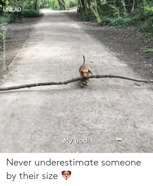 Dank, God, and Never: UNILAD  My god!  BOSCOANDHISBIGSTICK Never underestimate someone by their size 🐶