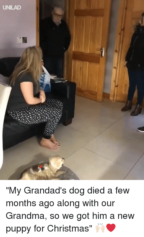 "Christmas, Dank, and Grandma: UNILAD ""My Grandad's dog died a few months ago along with our Grandma, so we got him a new puppy for Christmas"" 🙌🏻❤️"