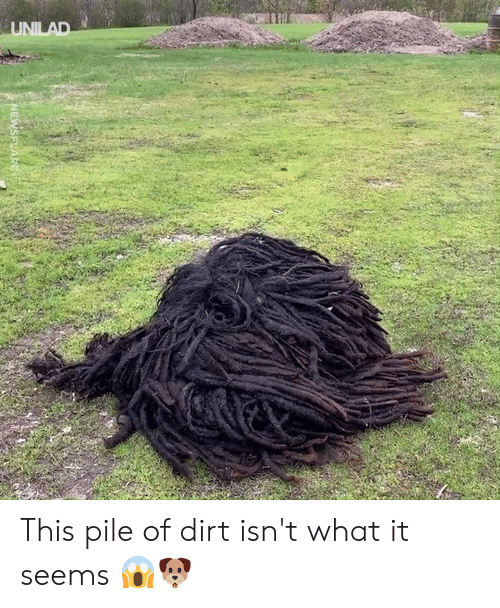 Dank, 🤖, and Dirt: UNILAD  NEWSFLARE This pile of dirt isn't what it seems 😱🐶